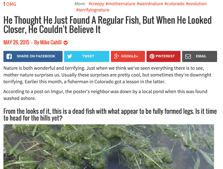 regular fish shock and awe headline